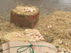 Eggs for sale